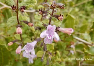 Flora Algarve, wilde bloemen en kruiden, Wandelroute Pereiro