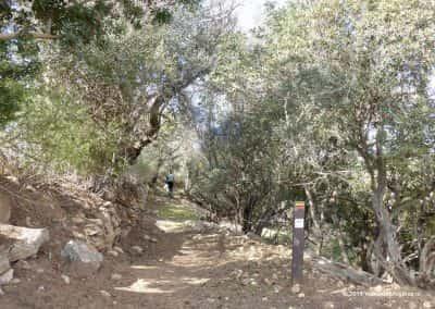 Olhão PR4 onder Pechão langs tussen de olijfbomen door