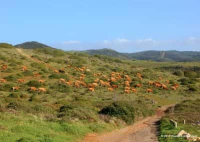 Groene heuvels van het Parque Natural da Costa Vicentina