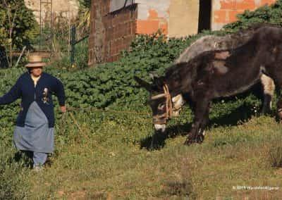 Wandelroute Tavira Boerin met ezel aan touw, traditionele landbouw
