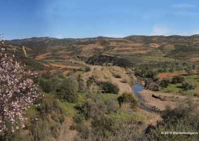 Groen heuvellandschap van wandelroute Tavira, kleine rivier, wandelroutes, amandelbloesem