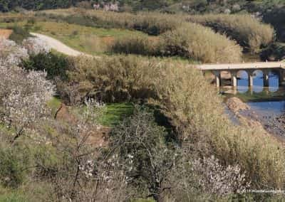 Wandelroute Tavira Kreek met brug, bloeiende amandelbomen, wandelpad
