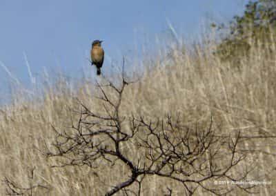 Vogels Algarve