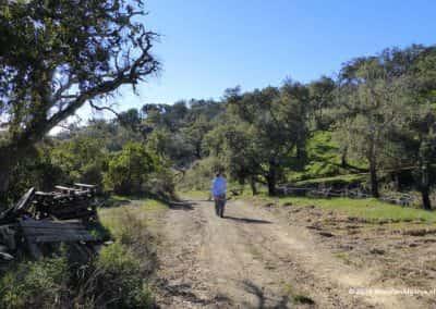 Wandelpad door groene heuvels met wandelaar