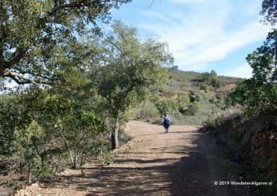 Wandelaar onder Johannesbroodboom op wandeling in bergen