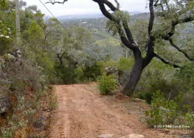 Kurkeik langs het pad van Amendoeira