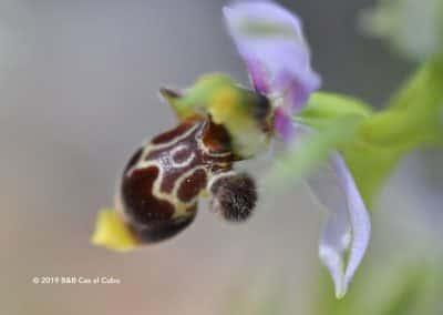 Wilde orchidee wandelroute LLE PR16