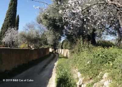 Lente in de Algarve, Romeinse paden met bloeiende amandelbomen