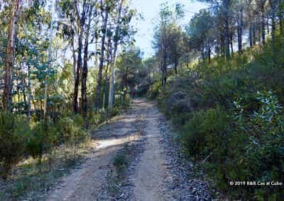 Wandelaars in het eucalyptusbos Odeleite
