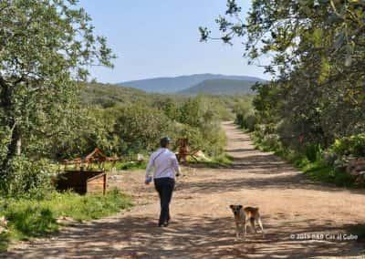 Wandelaar ontmoet boerderij hond