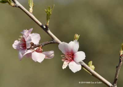 Flora Oost-Algarve Tavira