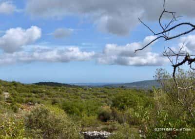 Typische flora Barrocal, blauwe lucht, uitzicht