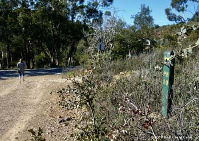 Rondwandeling, wandelaar, eucalyptusbomen, Algarve