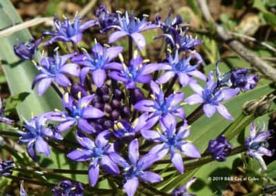 Flora Algarve op wandelroute Moinhos e Hortas (TAV PR10)