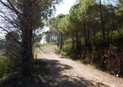 Een deel van de Pero de Amigos route onder de pinheiros