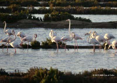 Fuzeta zoutpannen vogelparadijs vogelsoorten, vogelsoorten