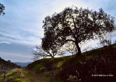 Steeneik langs route Alquevinhos