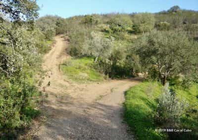 Wandelpad met olijfbomen en johannesbroodbomen