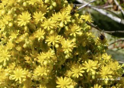 Flora Oost-Algarve langs wandelroute WandelenAlgarve.nl TAV PR11