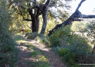 Kurkeiken naast wandelpad met wandelaar in Oost-Algarve