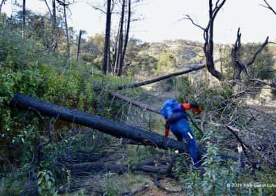 Verbrande boomstammen  nabij Cachopo