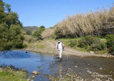Wandelaar steekt rivier over tussen rietkragen, heuvelland