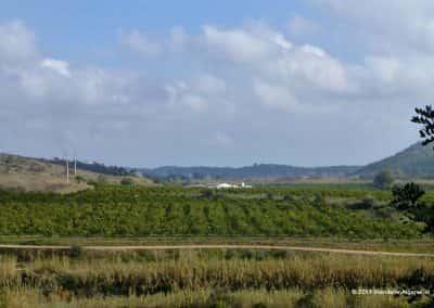 Sinaasappelplantage in de Asseca vallei
