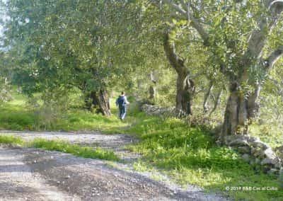 PR1 Caminhos e Encruzilhadas de ir à Fonte, São Brás de Alportel