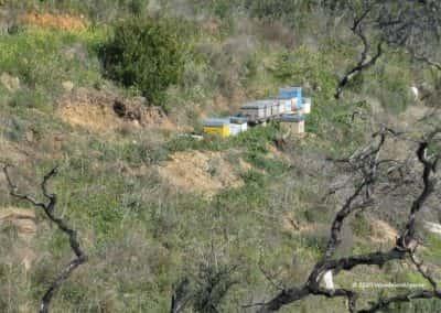 Bijenkasten op wandelroute PR15 in de heuvels van Tavira