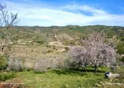 De groene heuvels rondom Alta Mora staan vol bloeiende amandelbomen op CTM PR8