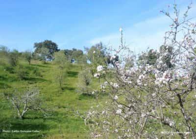Wandelen in het voorjaar op route CTM PR8 tussen de bloeiende amandelbomen