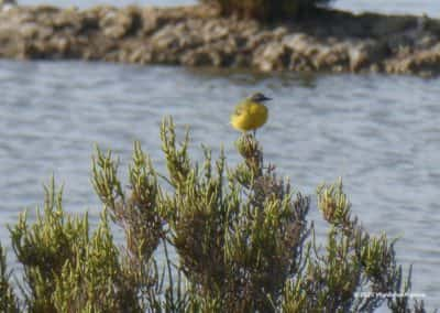 Wandelroute Sapal CAS PR11, PR9 en PR10 -  Reserva Natural de Castro Marim