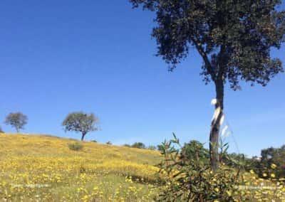 In de lente kleuren de heuvels in de Algarve geel, paars, wit en rood met veldbloemen LLE PR2
