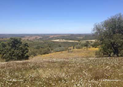Bloeiende velden in de heuvels van de noordelijke Algarve op LLE PR2