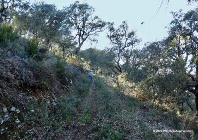 Vlak voor het dorp Alportel ligt een kurkeiken bos op wandeling Fonte Férrea