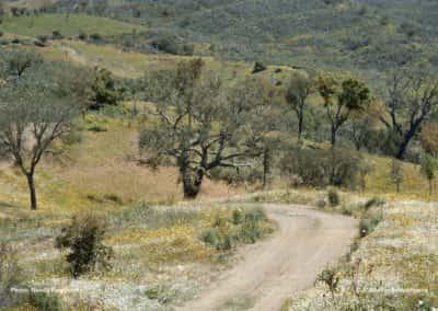 Kurkbomen en steeneiken in het landschap rondom Ameixial op wandeling Loulé PR1