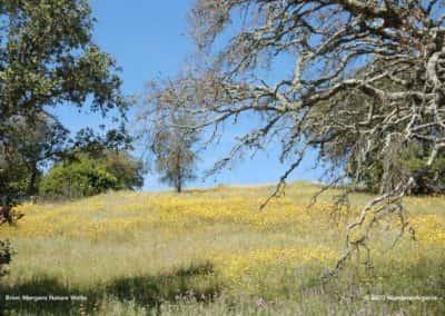 Gele bloemenvelden in de lente langs wandeling LLR PR01 bij Ameixial