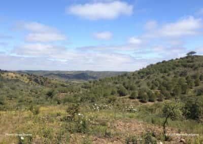 LLE PR21 glooiende heuvels aan de grens met de Alentejo