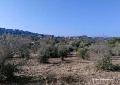 Cultuurland rondom Almargens op wandelroute Varzea de Cova SBA PR5