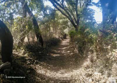 Door bomen omzoomd pad op wandeling PR5 van São Brás de Alportel
