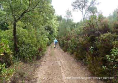 Bossen rondom Barranco do Velho