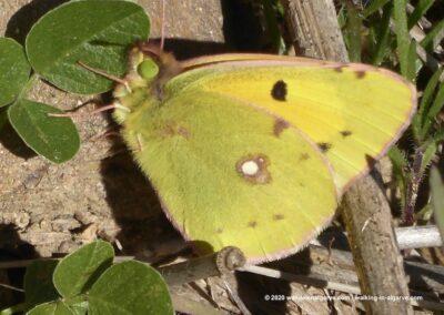 Tavira wandelroutes vlinders