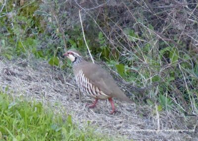 Wandelroutes Tavira - Vogels kijken