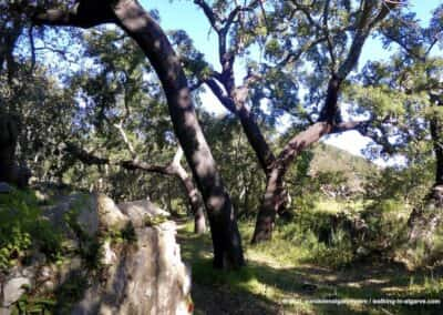 Sao Bras de Alportel wandelroutes - Vale de Alportel