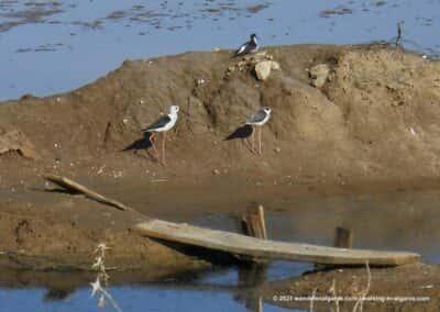 Ria Formosa zoutpannen - Wandelroutes Olhão - vogels kijken Portugal