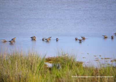 Ria Formosa Olhão vogels kijken