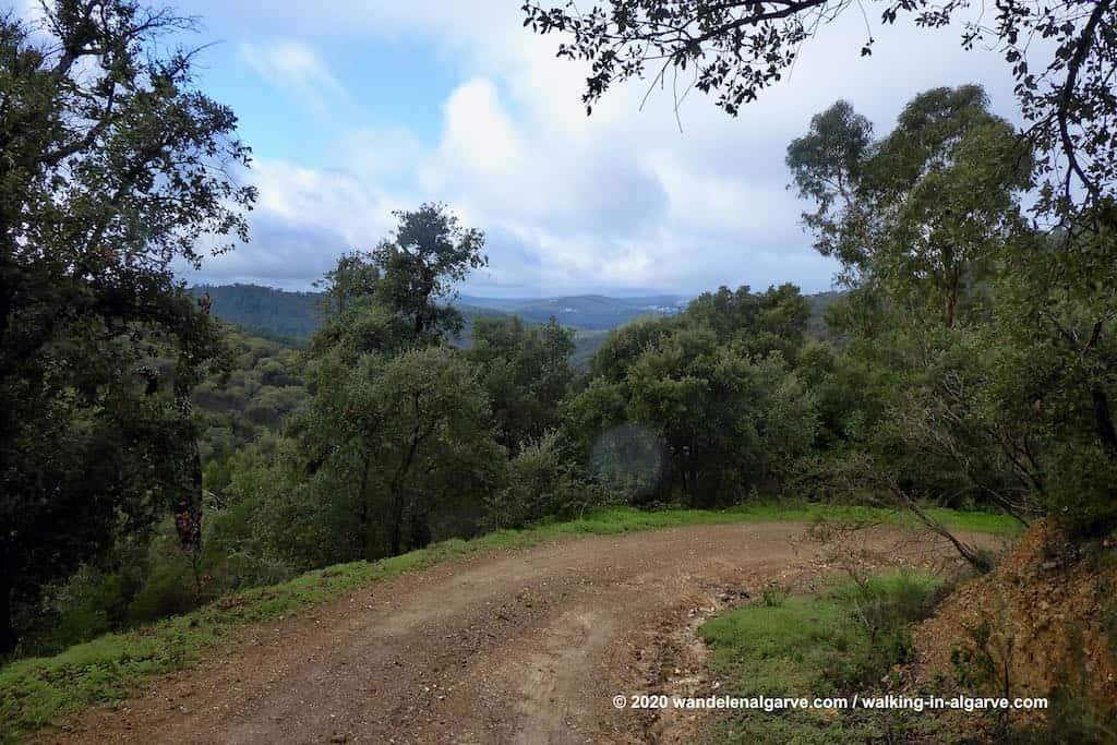 In het eucalyptusbos van het Mata da Conceicao